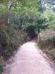 こんな道を歩きます